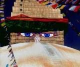 Portret użytkownika martakiwi