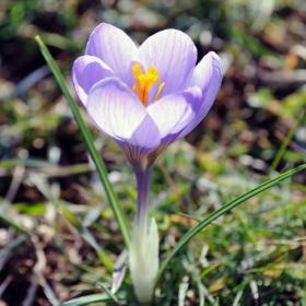 Powoli nadchodzi wiosna